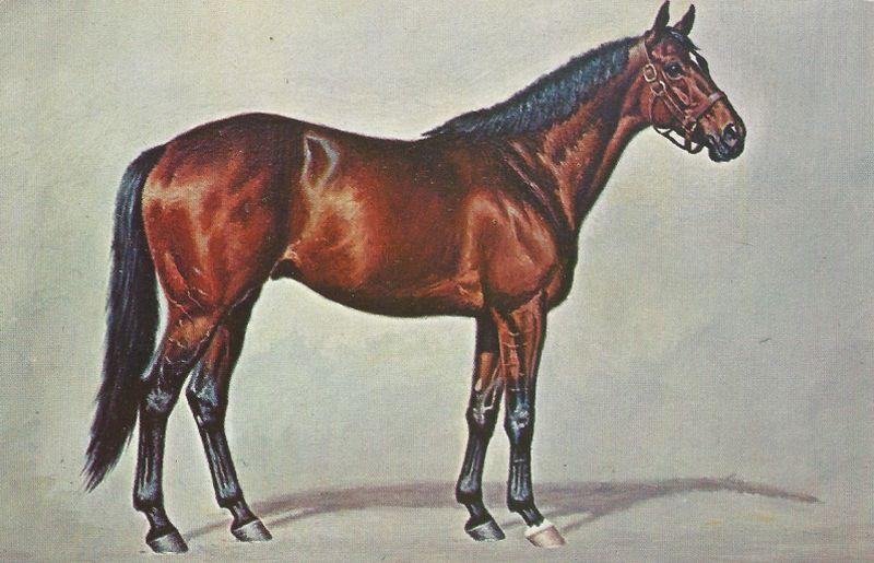 Nashua at Spendthrift Farm Horses, Thoroughbred