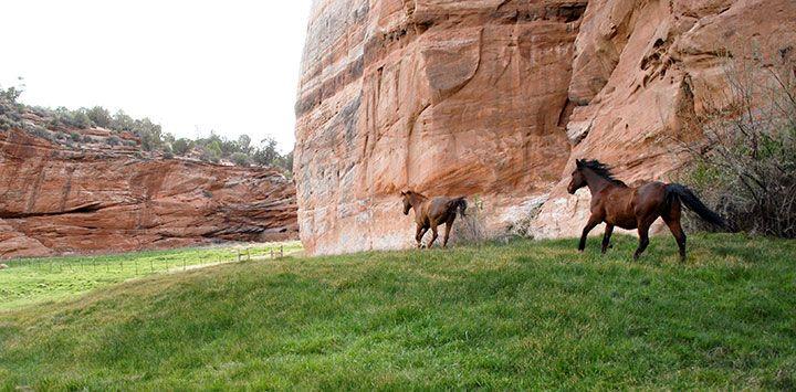 Explore The Sanctuary No Kill Animal Shelter Animal Society