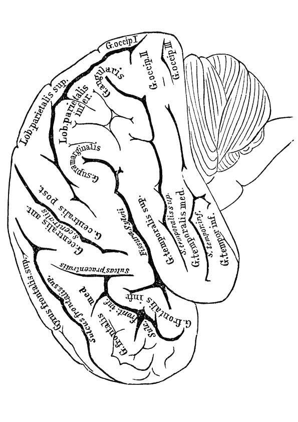 print coloring image | Cuerpo humano, Habilidades motoras y Septimo