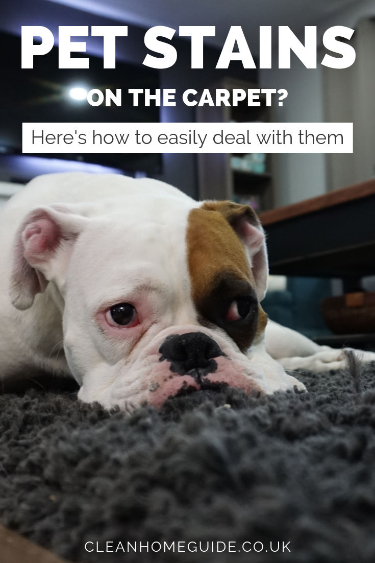 How To Remove Pet Pee Stains From Carpet Pee Stains Remove Pet Stains Pet Stains