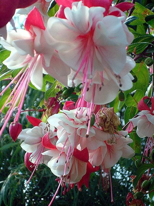 Pin On Gardening That I Love