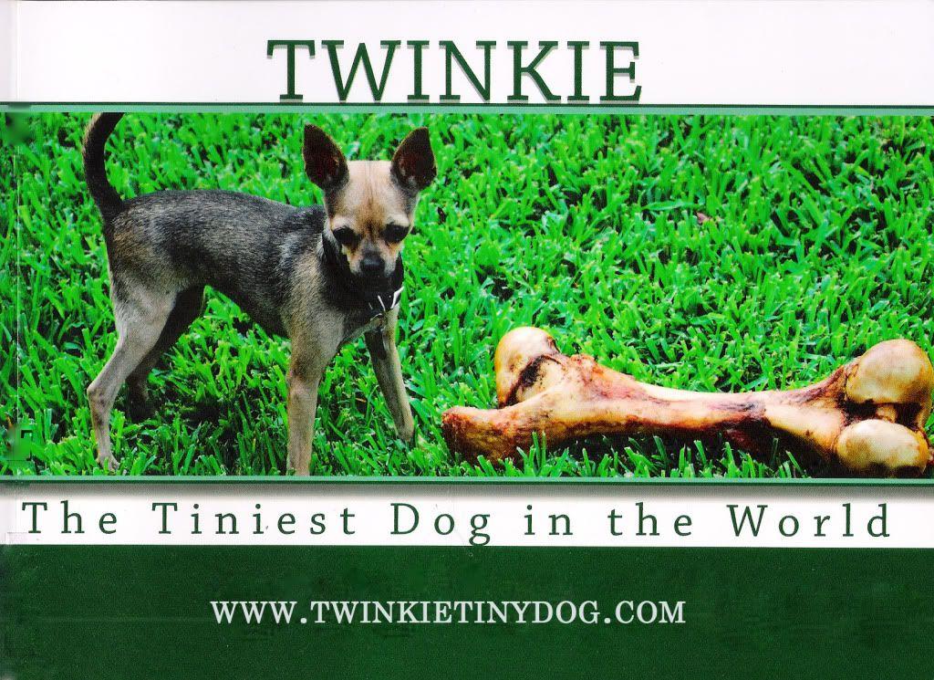 Twinkie Tiny Dog Teacup Chihuahua A Dog Blog Dog Diarrhea A