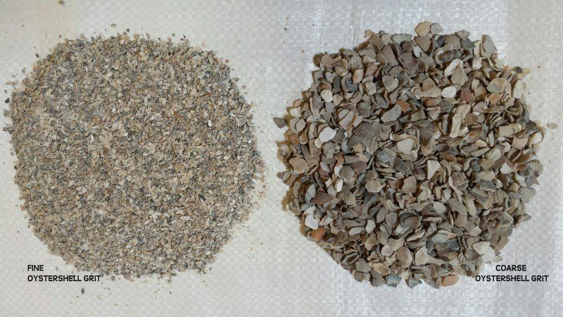 Oyster Shell Grit Provides A Natural And Readily Available