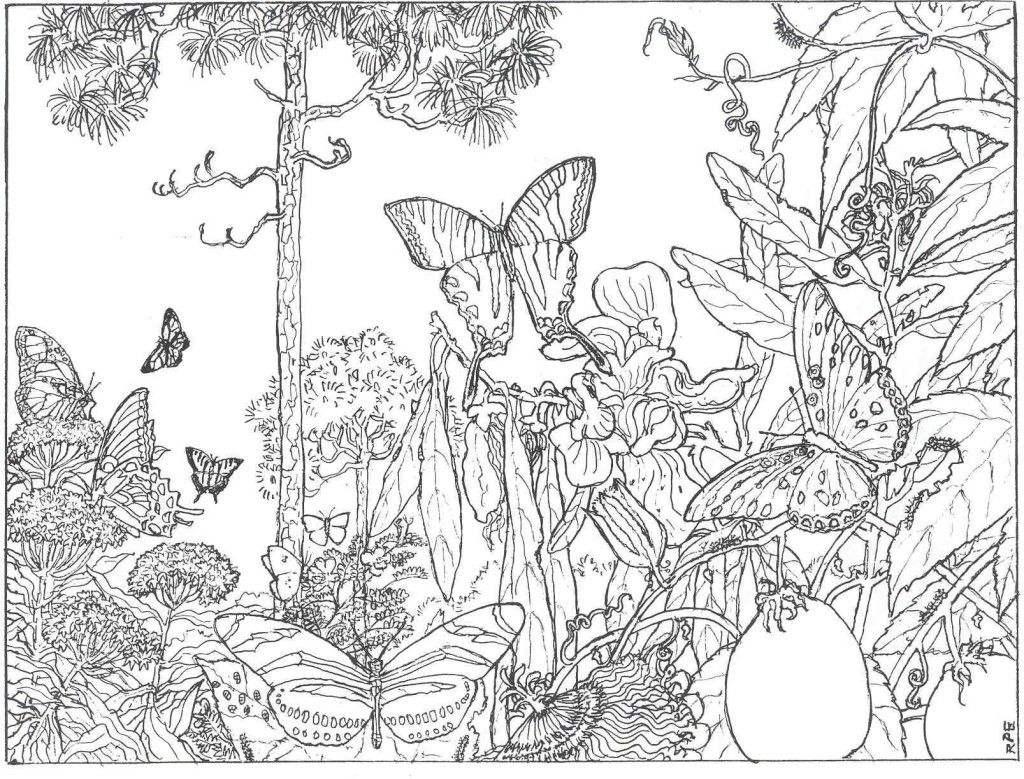 The Longleaf Forest Alive Beautiful Colors Butterfly Coloring Page Detailed Coloring Pages Enchanted Forest Coloring Book