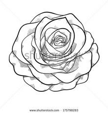 Traditional Rose Line Drawing Nose Design Images Mandala Mdf Tattoo On Hand