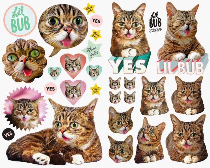 I used to be scared of cats random amazing cat things 3 lil bub