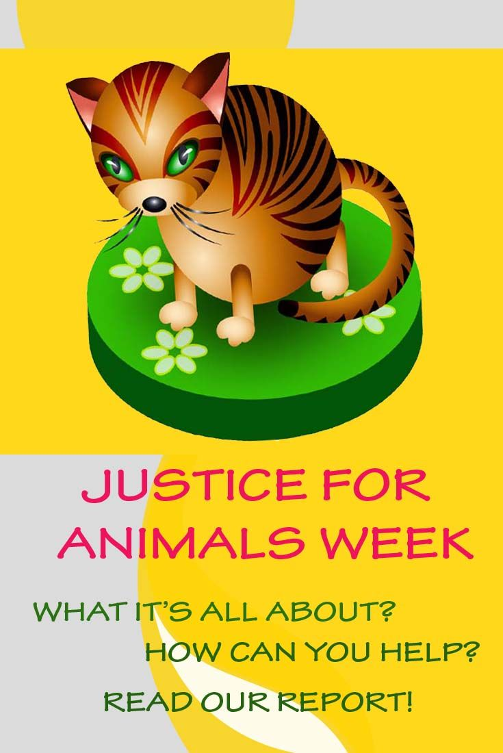 Justice for animals week is on now animal projects