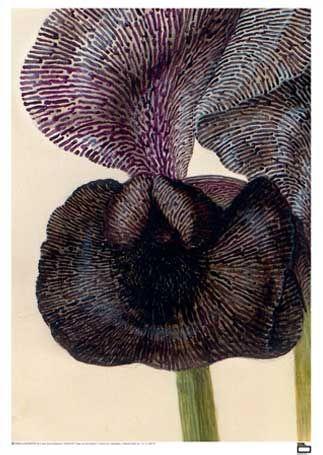 Sørge-iris og violrod. Til børneværelse/Iris' værelse.