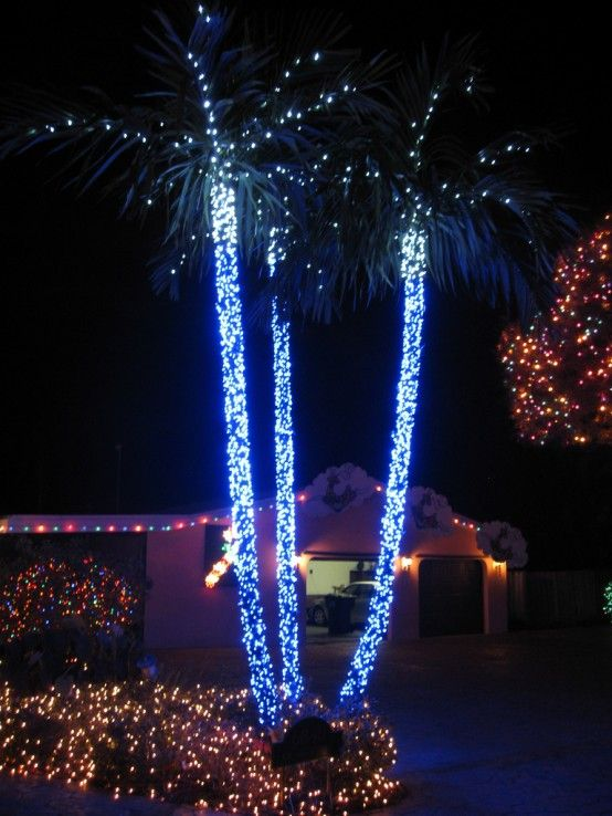 There S Something Magic About All Of Our Palm Trees Decorated In Christmas Lights Definitely One My Favorite Things Here