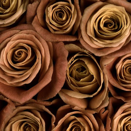 коричневый цвет картинки цветы прикрепить