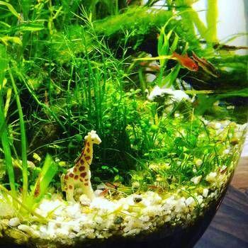 手軽に始める小さな水族館 ボトルアクアリウム の作り方 キナリノ ボトルガーデン アクアリウム 水草
