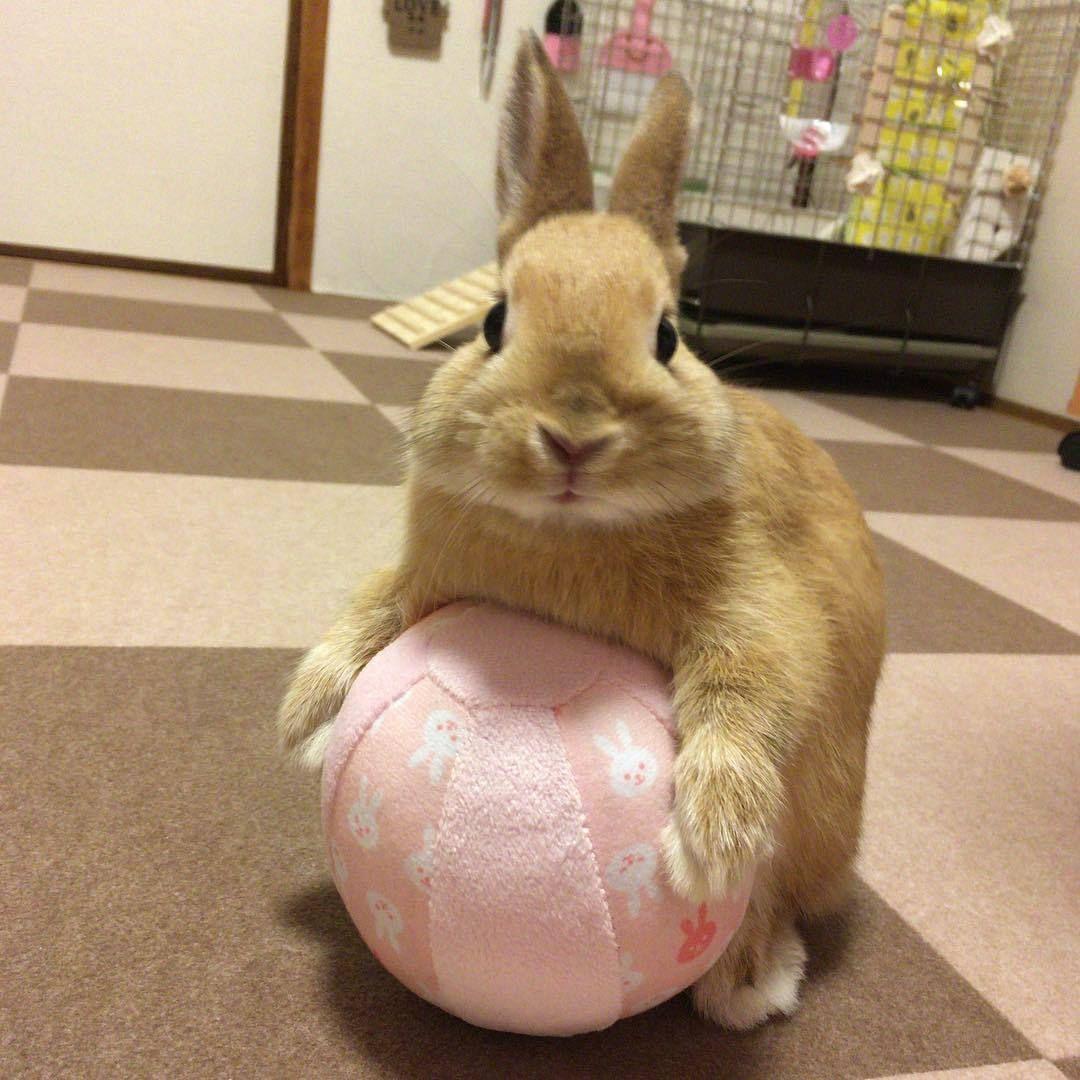 What To Buy Next For Your Bunny Rabbit Pet Bunny Pet Rabbit Diy Bunny Toys
