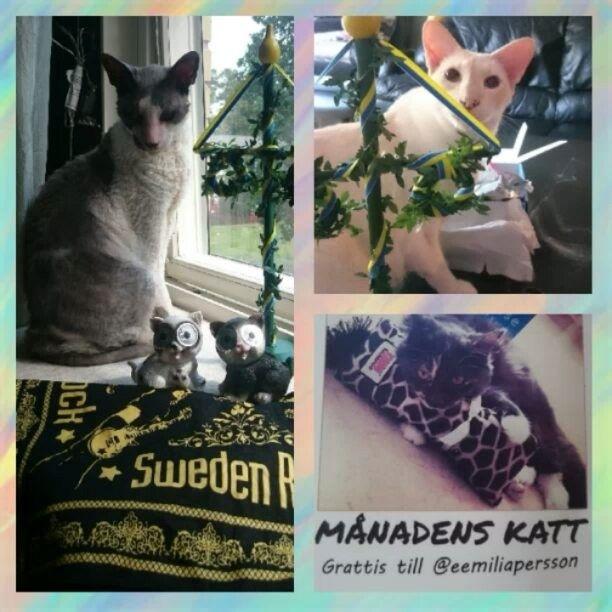 Trevlig midsommar 🤘 &  Grattis @eemiliapersson till månadens katt i #kattbox från Mr Mini🐈 & Mr Phoenix🐈