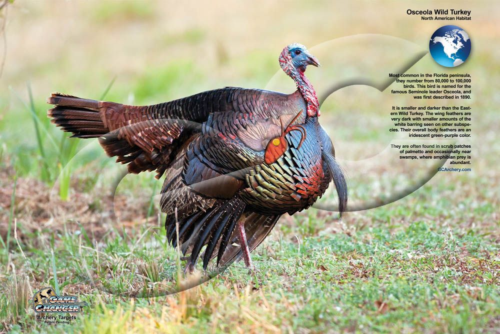 Diagram Wild Turkey Archery Shooting - Data Wiring Diagrams •