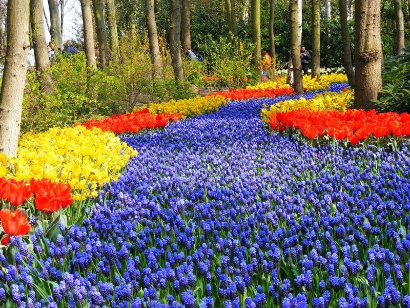 Cute Photo of Amsterdam Keukenhof Gardens and Tulip Fields Tour from Amsterdam Beautiful Gardens