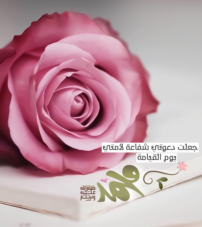 Pin By Ayat Murad On حبيبي الذي لم أراه عليه ألف سلام وصلاهﷺ True Love Rose Positive Notes