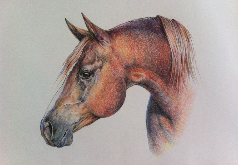 Pin By Strathmore Artist Papers On Bristol Paper Horses Horse Drawings Equine Art Pencil Drawings