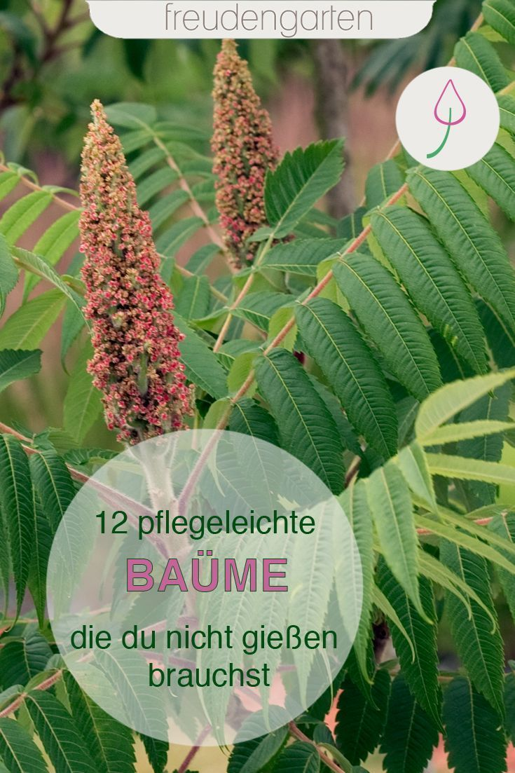 Pin On Garten Pflanzen Diy