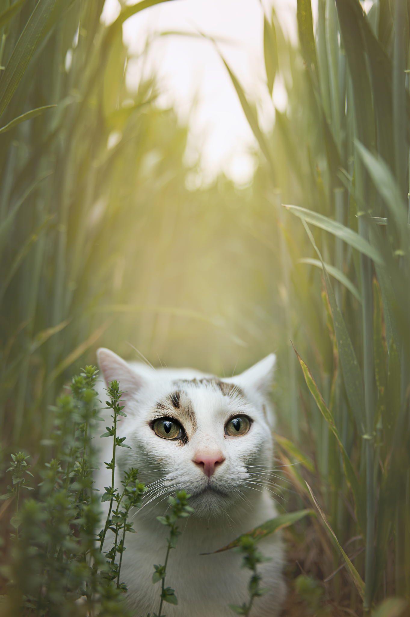 cat by Elena Joland / 500px