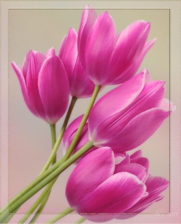 floral theme | flores | pinterest | flores, gato y pinturas