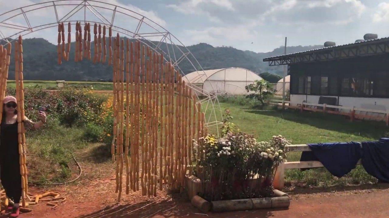 مزرعة ذرة في جبال خاو ياي لا تفوتنا منتجاتها ابدا Thailand Structures Life