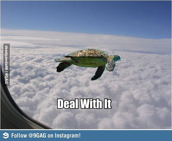 Flying Turtle Funny Animals With Captions Funny Animal Pictures Animal Captions