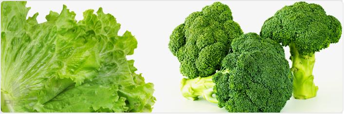Grow Lettuce And Broccoli Hydroponically Hydroponics