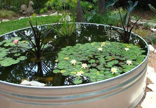 Exceptionnel Wyoming Stock Tank Gardener; Stock Tank Water Garden | Gardening And Outer  Aesthetics | Pinterest | Stock Tank, Gardens And Garden Ideas