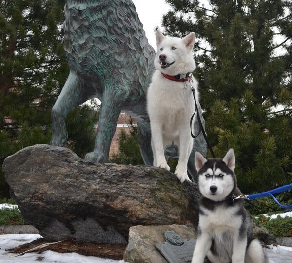 Uconn Huskies Mascots Jonathan Xiii Left And Jonathan Xiv