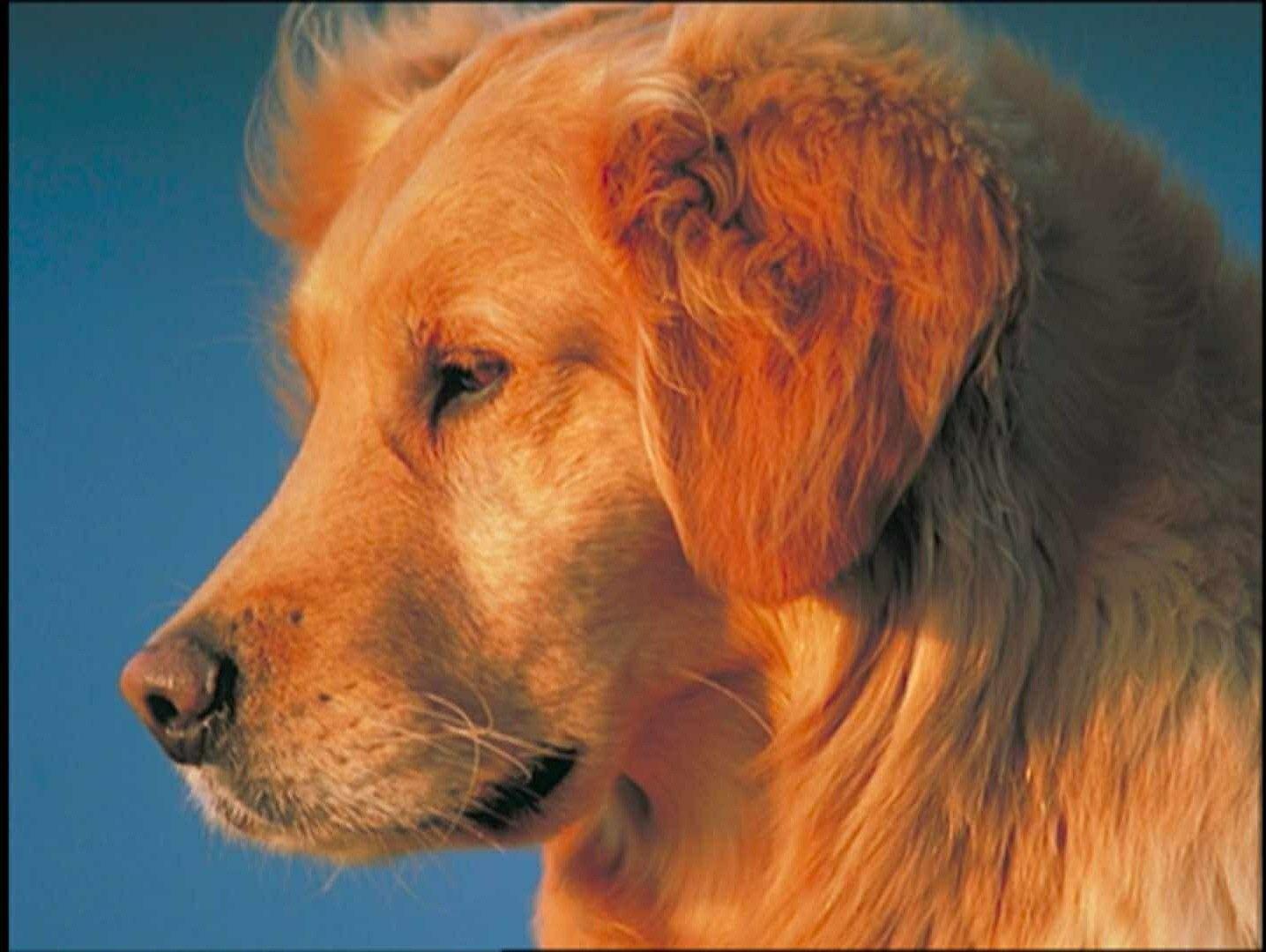 Pin By Gabe Giraldo On Baby Einstein Animals Pictures Dogs Animals