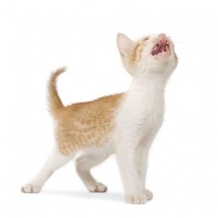 Do Kittens Lose Their Baby Teeth Lovetoknow Losing Teeth Kittens Baby Teeth