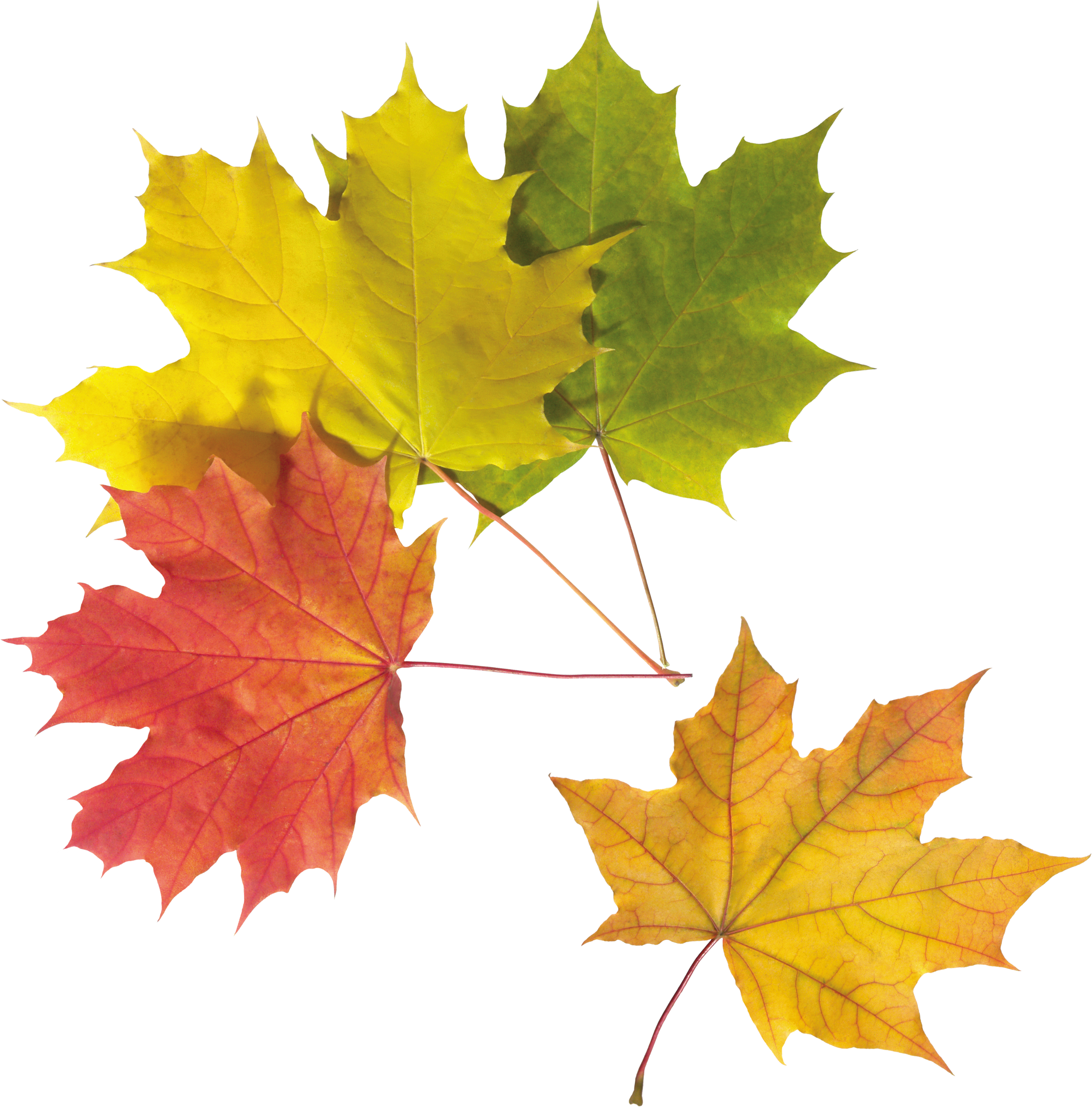 Png Images Fall Leaves Png Autumn Leaves Leaves