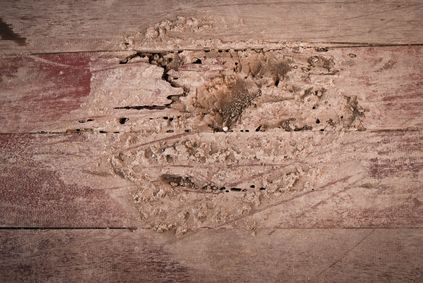 How To Prevent Termites From Eating Furniture Termites Signs Of Termites Termite Prevention