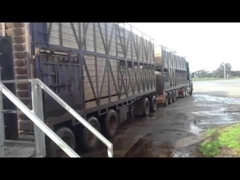 """boiadeiro """"julieta caminhao alongado carreta"""" - YouTube"""