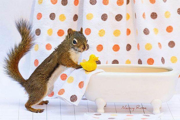 Un Ecureuil Super Mignon Photographie Dans Des Positions Adorablement Humaines Ardillas Ecureuil Mignon Ecureuil Drole Et Animaux Rigolo