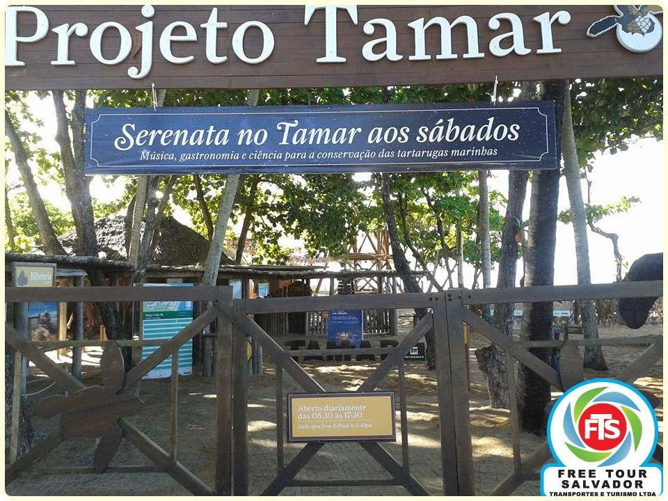 Projeto Tamar Praia Do Forte Bahia Com Imagens Aeroporto De