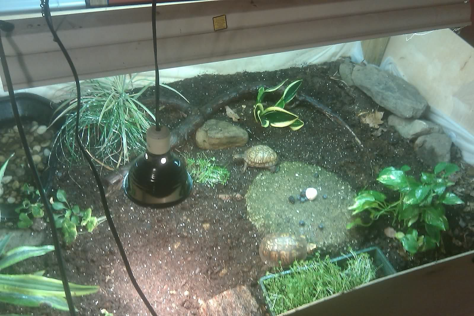 Needing some help for my Eastern Box Turtle - What I Want To Do, A Turtle Bookshelf. Favorite Places & Spaces