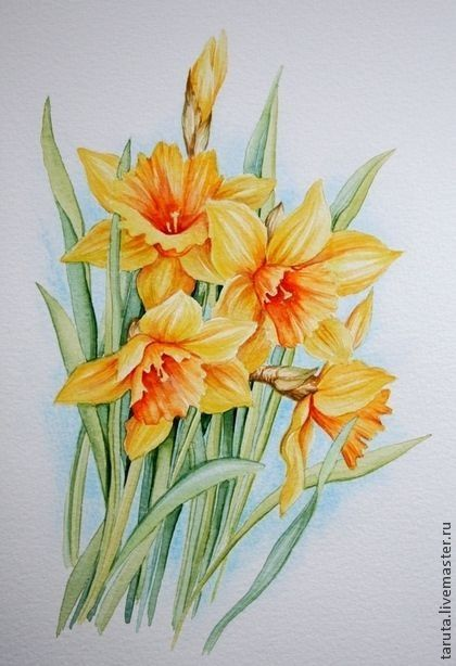 Image Dessin Fleur De Nadine Desimages Du Tableau Jonquilles A L