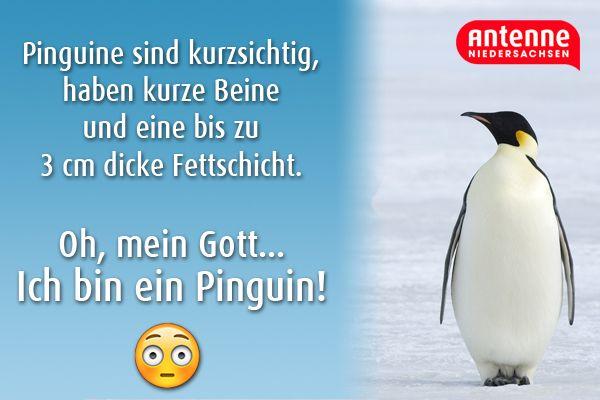 Vielleicht Gibt Es Viel Mehr Pinguine Als Gedacht Lustige Spruche Und Zitate Antenne Lustige Spruche Pinguine