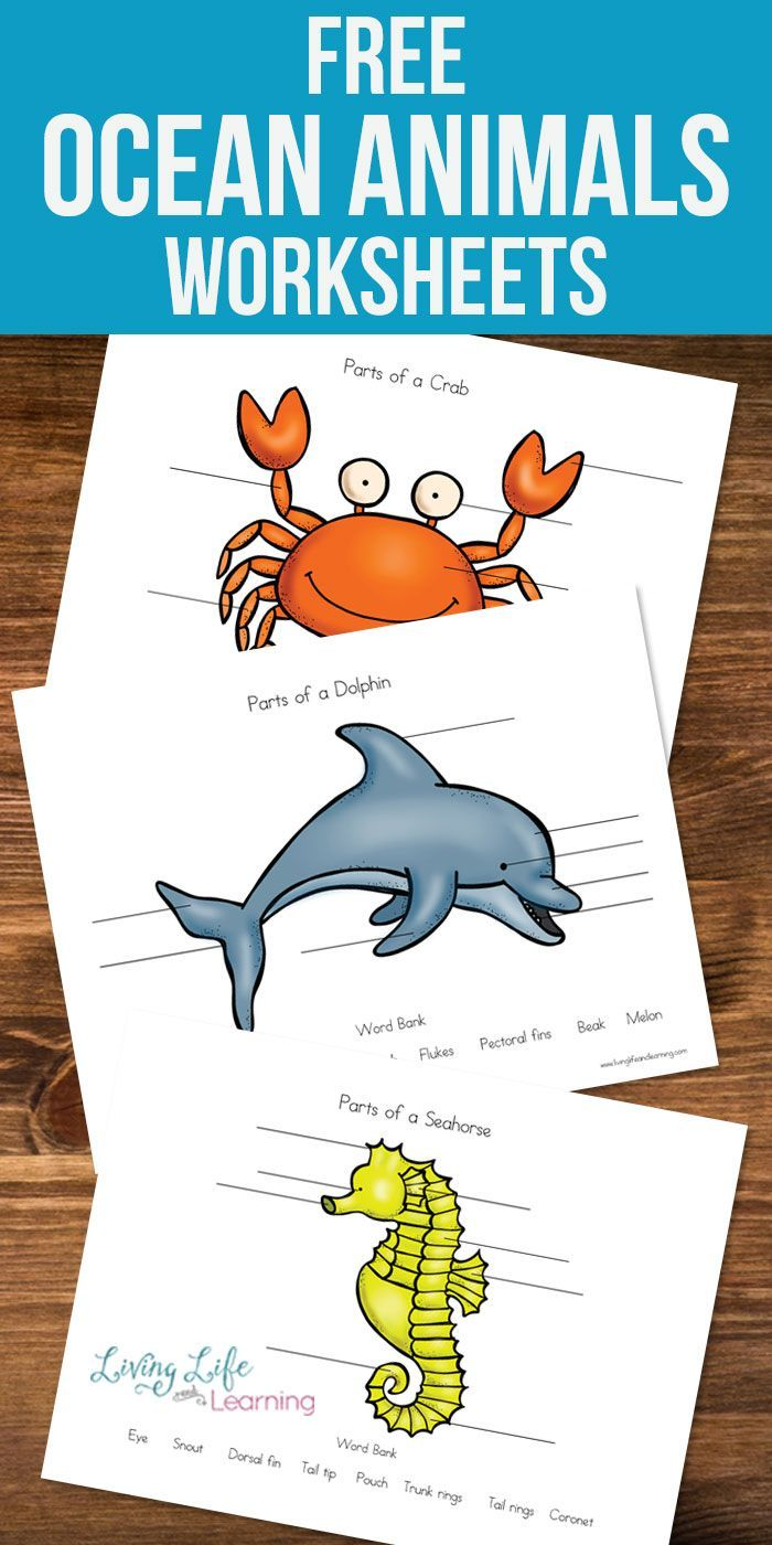 Techsurgeons Access Blocked Animal Worksheets Ocean Animal Crafts Ocean Animals [ 1400 x 700 Pixel ]