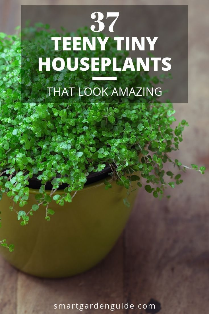 Impossibly cute little indoor plants for small spaces. I've picked out the most beautiful, interesting and unusual indoor plants for small spaces. Read more at smartgardenguide.com #patioplants