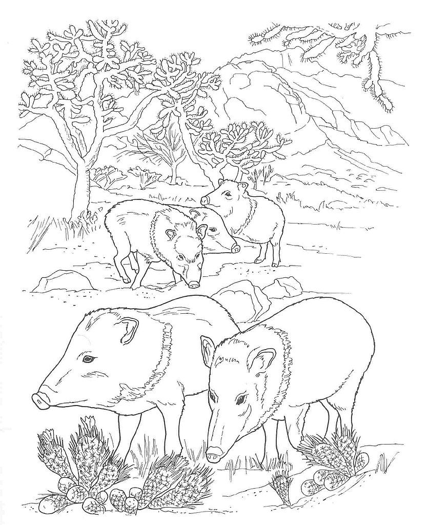 Desert Animals Coloring Pages