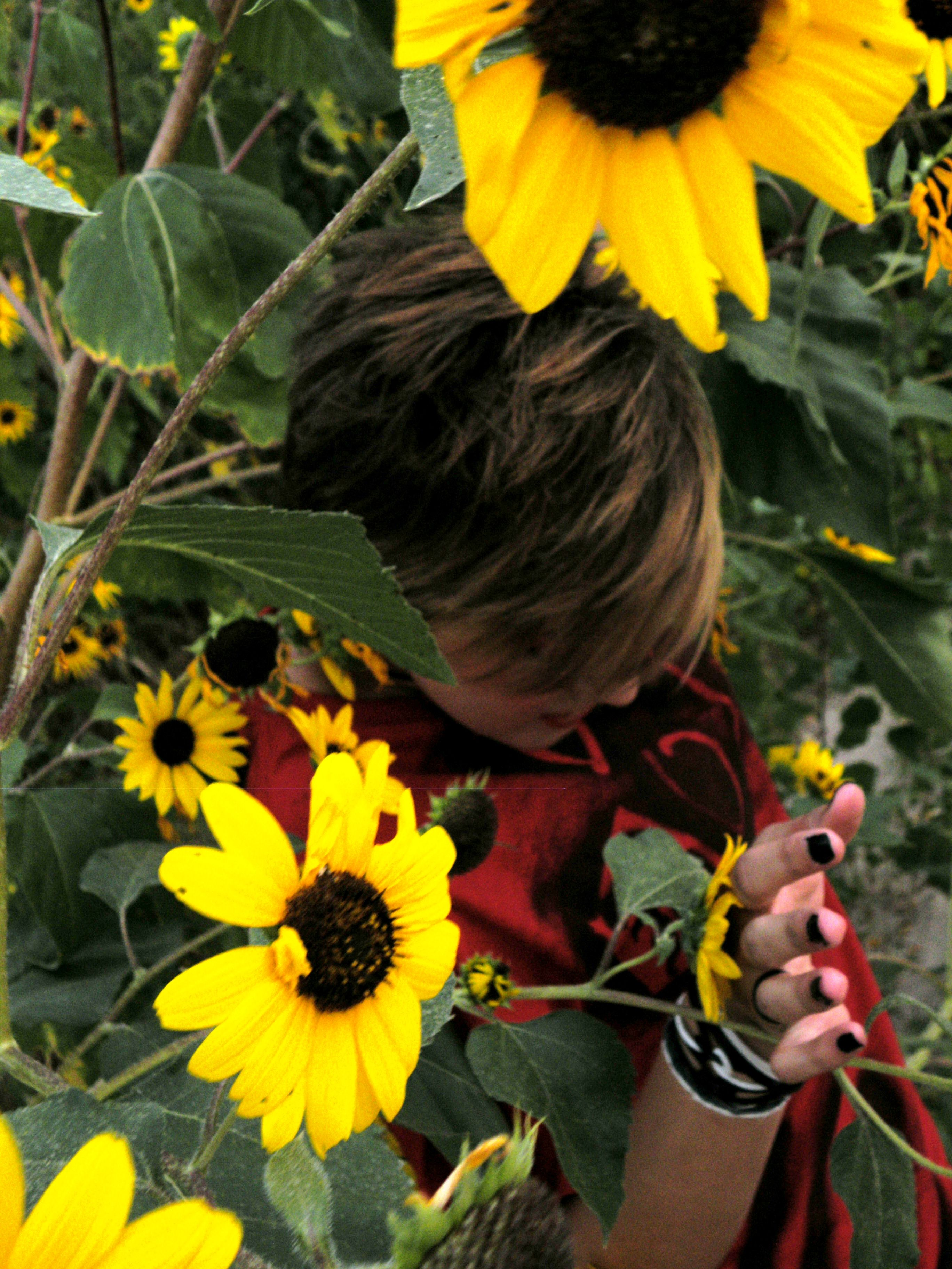 Sunflower * Emotional Brand Clothing * Look for it on Facebook