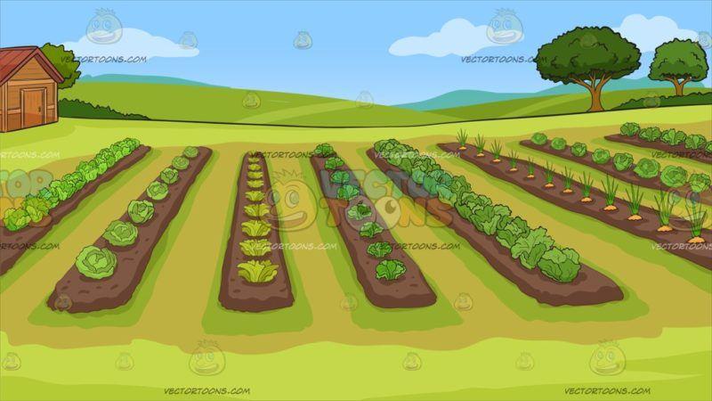 A Vegetable Garden Background Farm Cartoon Vegetable Cartoon Kinds Of Vegetables