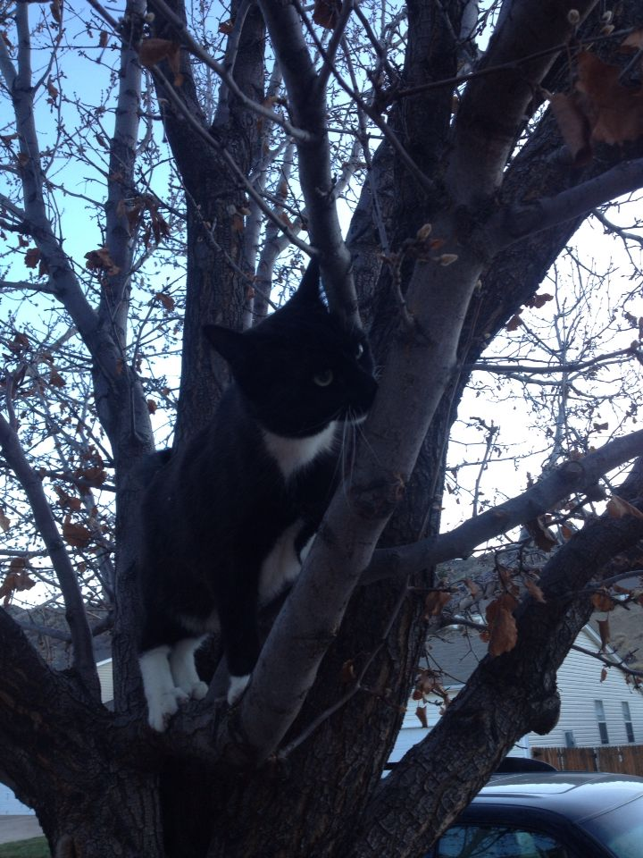 Adorable cat in tree!!❤️
