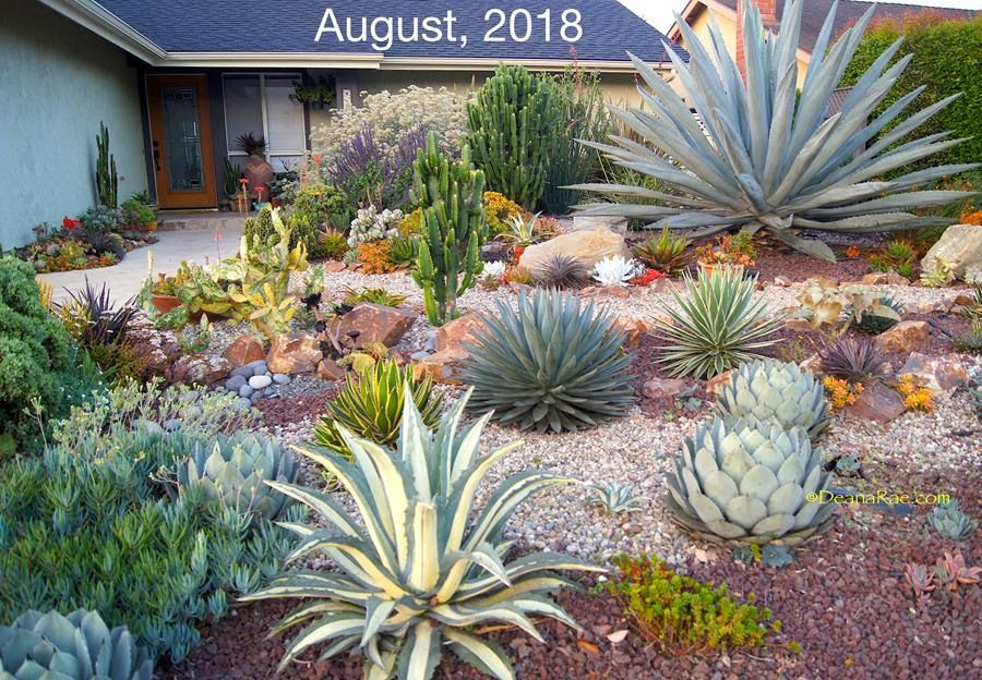 Displaying Succulent Landscaping Succulents Garden