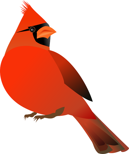 Free Image On Pixabay Cardinal Bird Cardinalidae Bird Clipart Bird Outline Red Bird Tattoos