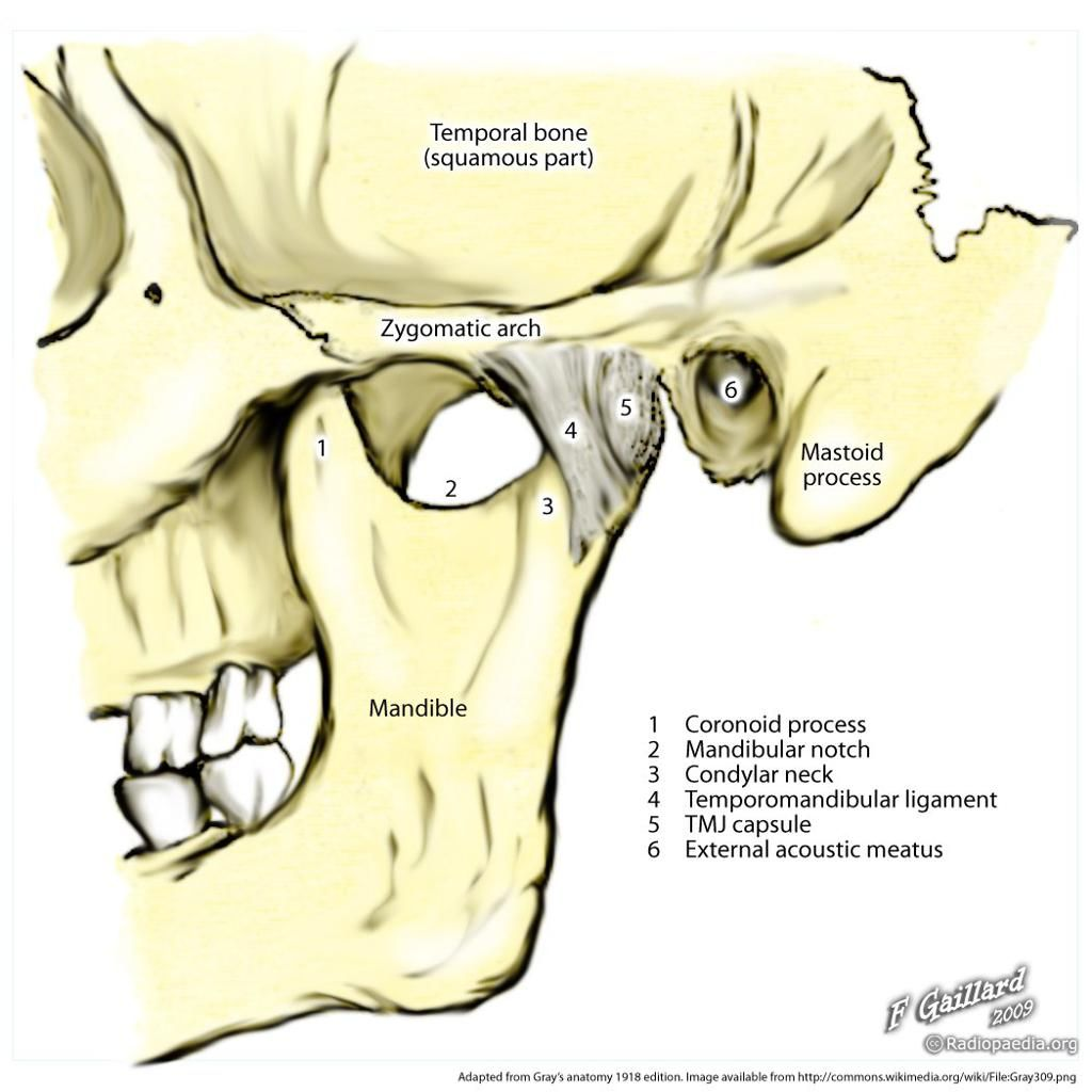Pin Em Medical Illustrations