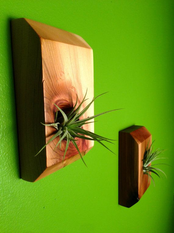 Reclaimed Wood Wall Mounted Air Plant By