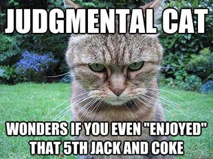 judgmental cat drunk | Judgmental Cats | Angry cat memes